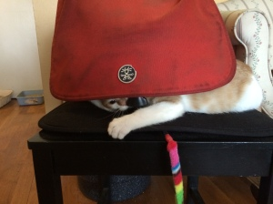 Ryan loves to hide behind my camera bag flap.